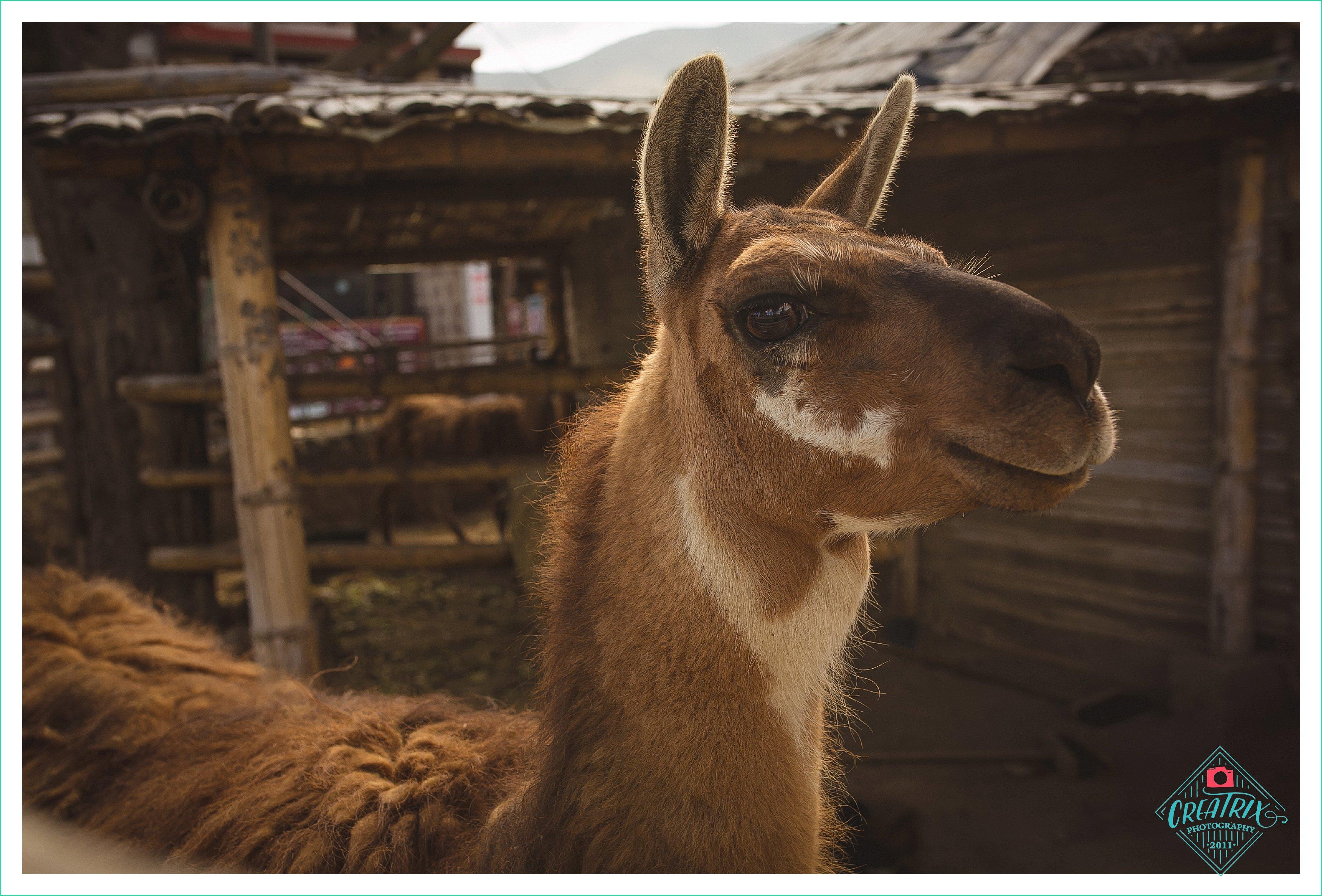 How Ecuador Saved Me – Austin Elopement Photographer