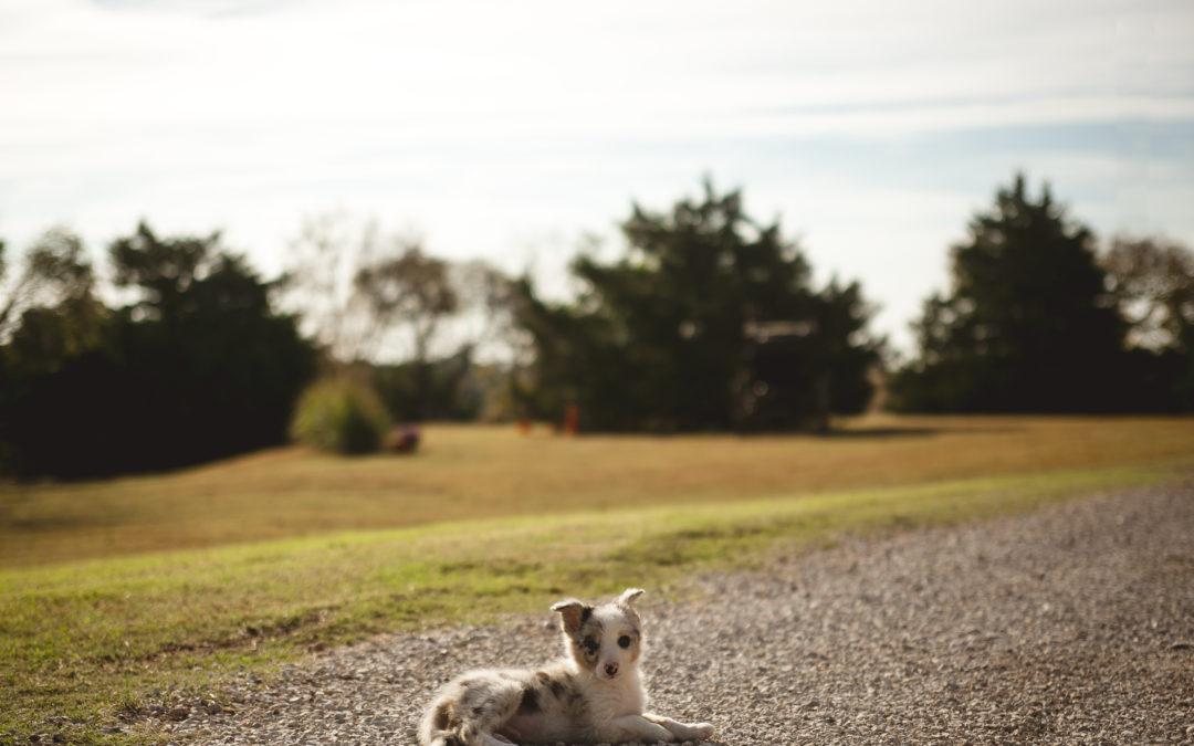 Introducing my new puppy, Argo!